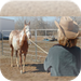 Horse Training - Beginners Guide To Becoming A Horse Trainer